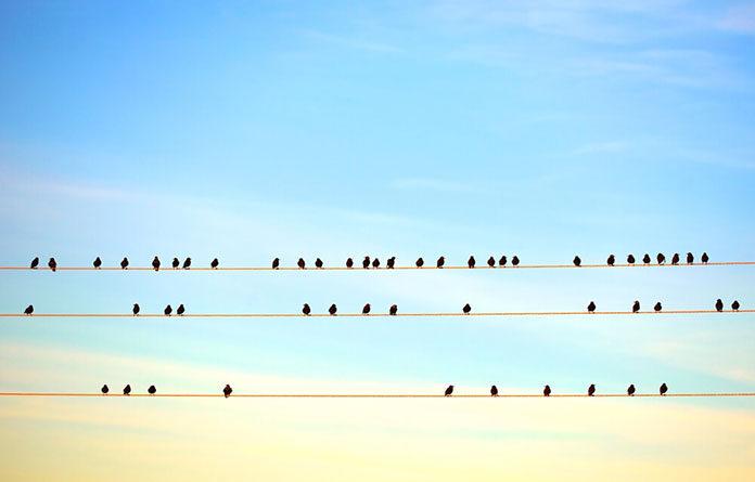 Jak odstraszać skutecznie ptaki